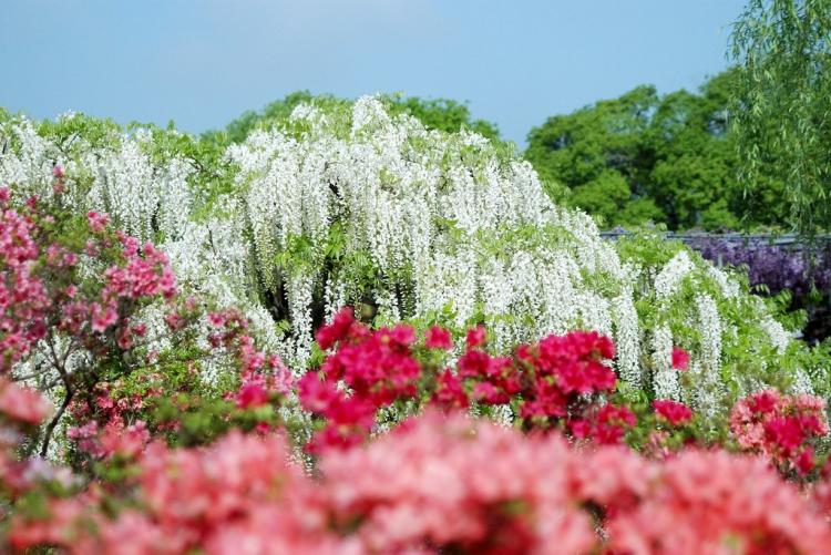 японский цветочный сад