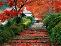 Чудесная страна Япония